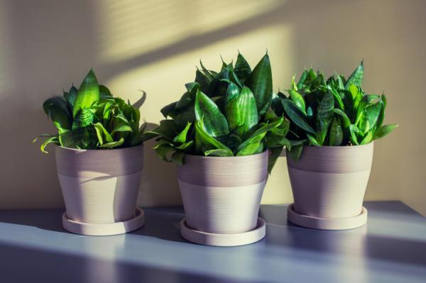 sun and shade plants