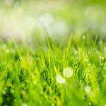 Grass care in the spring: 5 tips
