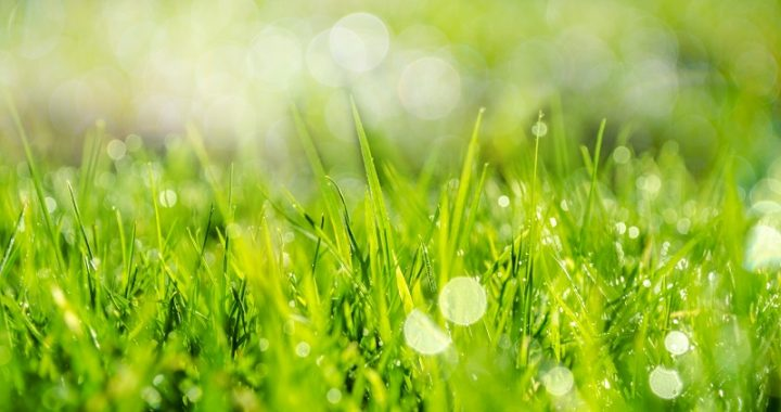 Grass care in the spring
